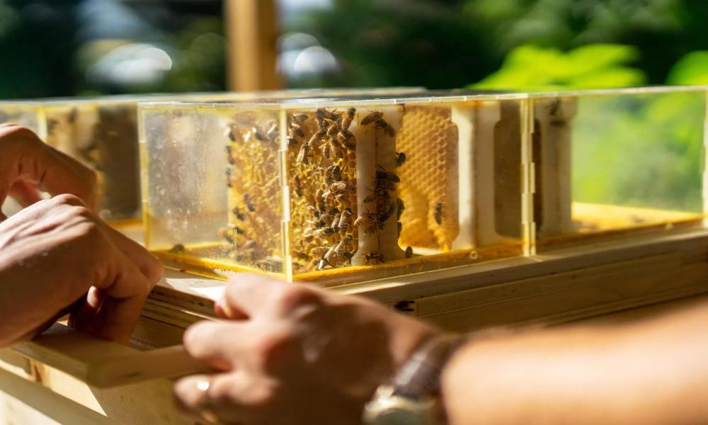 دستگاه حفاظت از زنبور عسل در نمایشگاه CES سال 2021